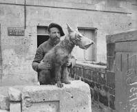 Canil Militar. Cão com gás máscara - abril de 1918