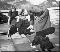 Eva e Hitler, com seus dois cachorros Scottish Terrier, Negus e Stasi. Hitler tinha uma outra cadela, a quem Eva odiado.
