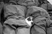 O cachorrinho achou o lugar mais quentinho da guerra