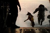 Cão Pára-Quedista - Forças Especiais