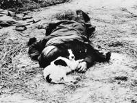Soldado caído...O cachorro não deixa o dono