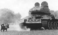Os soviéticos treinaram cães para atacar panzers com explosivos no corpo, eles iam para baixo do tanque e o explosivo era acionado, mas o projeto foi abandonado porque muitos cães retornavam para seus donos.