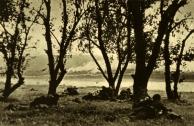 Em 18 de julho tropas romenas e alemãs cruzam o rio Dnestr