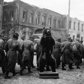 Urso prisioneiro de guerra