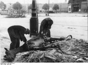 Berlin, Einwohner zerlegen ein Pferd