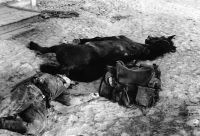 Dead Cossack Soldier With DeadHorse
