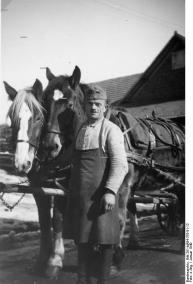 Hagios v. Gottenheim mit Pferden