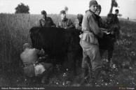 aliviando a vaca